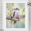 Laughing Kookaburra Digital File