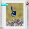 Superb Fairy-wren Digital Art