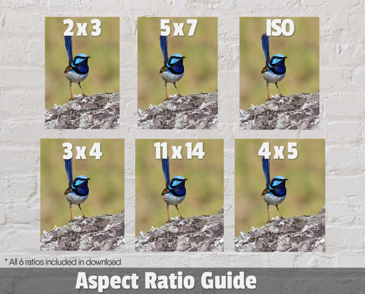 Superb Fairy-wren Ratios