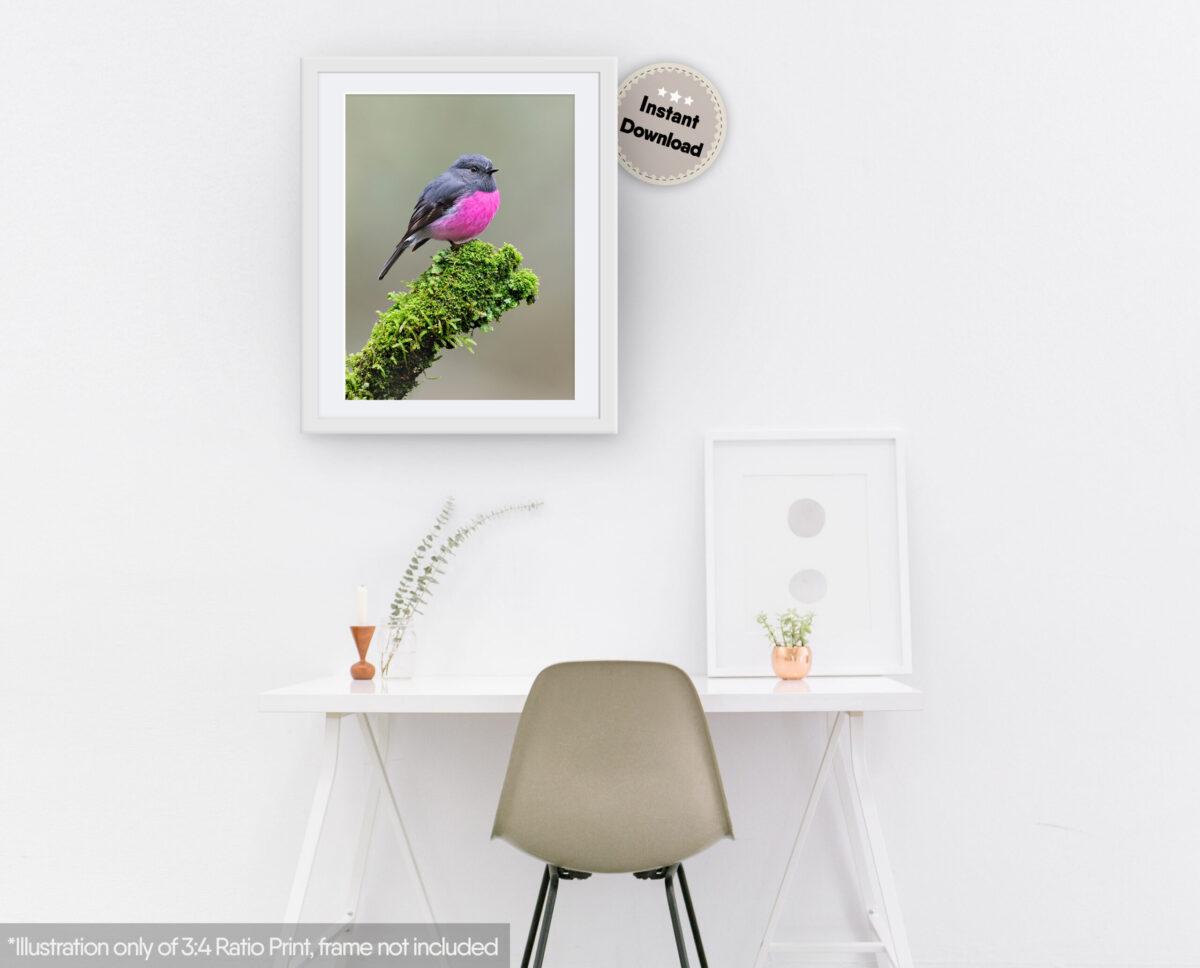 Pink Robin Digital File
