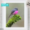Pink Robin Digital Art