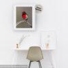 Red-capped Robin Digital Art