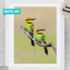 Rainbow Bee-eater Digital Art