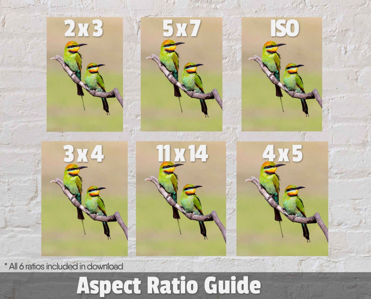 Rainbow Bee-eater Ratio Guide