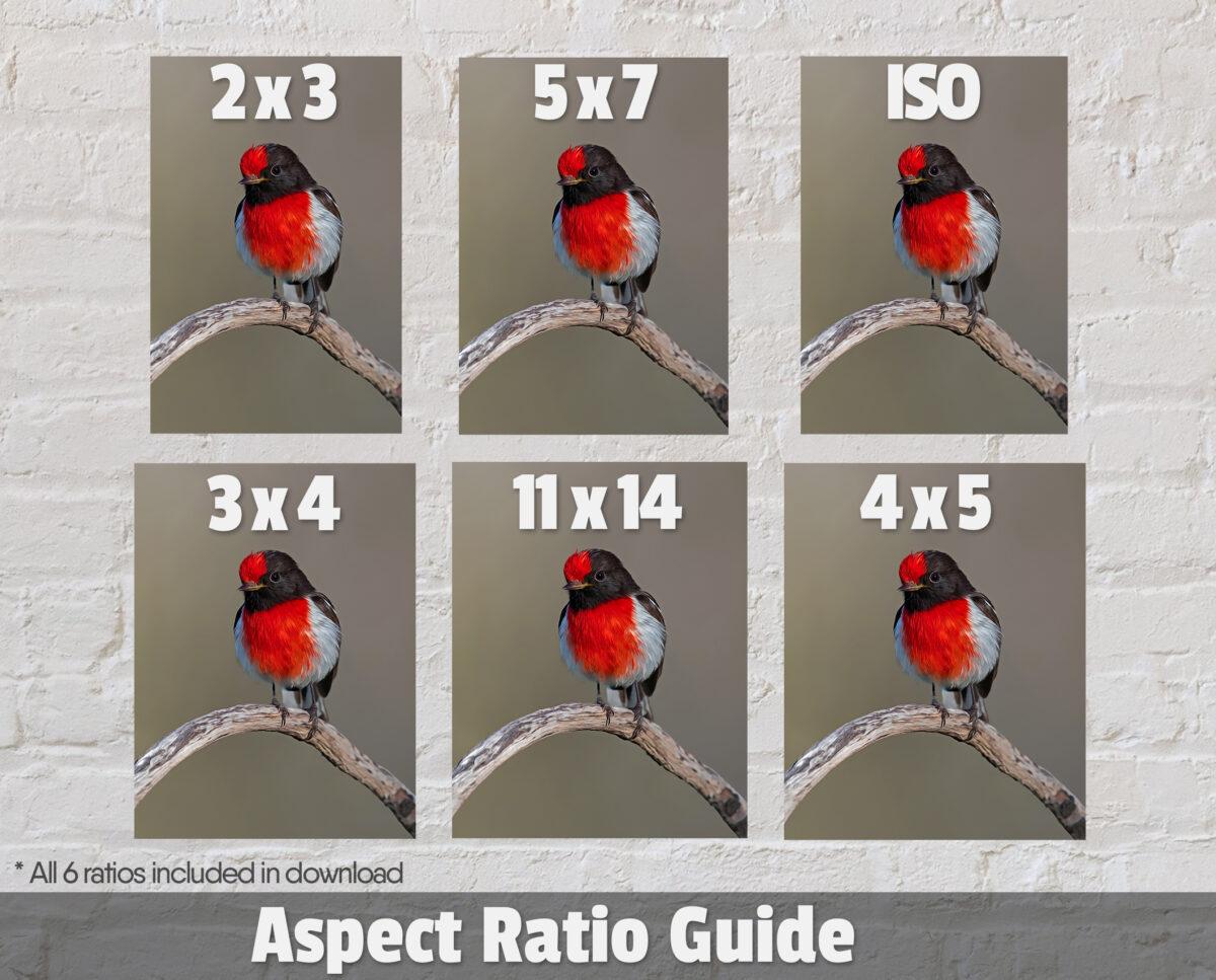 Red-capped Robin Digital Art Ratios