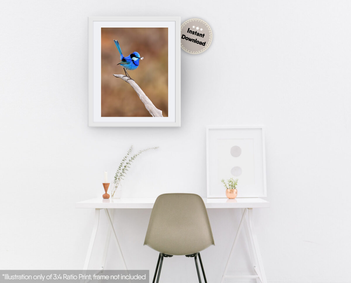 Splendid Fairy-wren Digital Art
